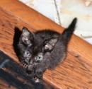 Ember_kitten.jpg