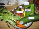 garden_salad.jpg