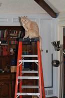 ladder_boy1.jpg